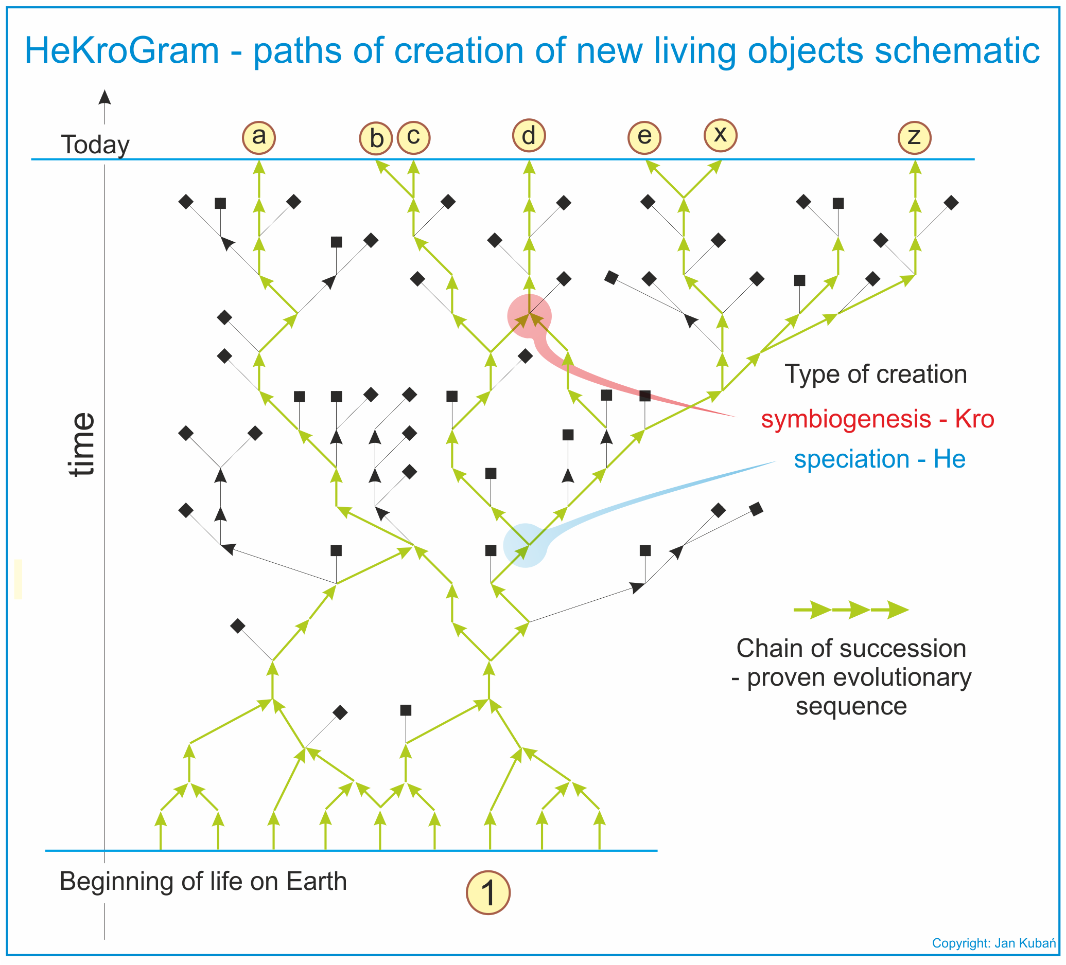 HeKroGram - paths of creation of new living objects schematic